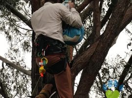 We now have a qualified arborist/tree climber on our team