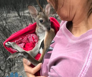 Dr ElaineOng with orphaned Joey
