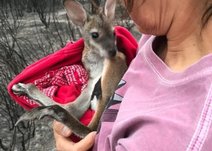 Dr Elaine Ong with a beautiful red-necked orphaned wallaby