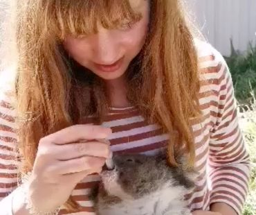 Rescued_Koala_CapeBridgewater01