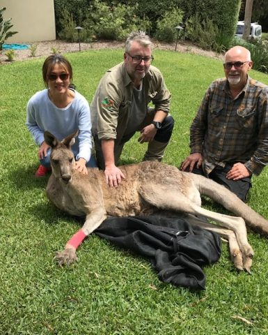 Roo Recovery, making great progress…